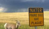 Prairie Dogs Have Plague!